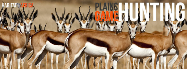 Hunting Plains Game in South Africa